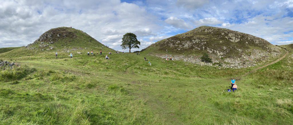 Sycamore Gap - Tree